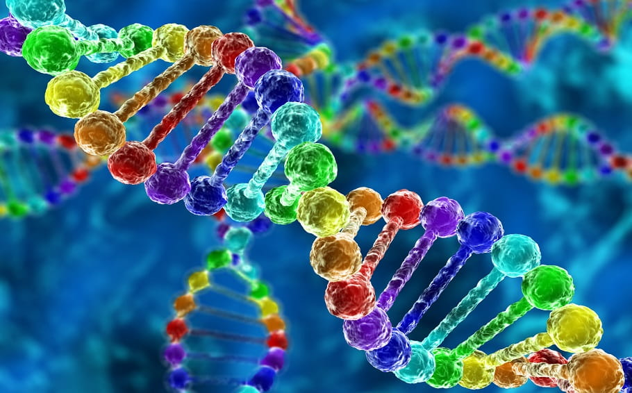 Q&A: Gay Genes and On What Is Unnatural